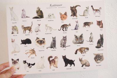 スウェーデン カード 猫 紙もの ペーパークラフト 大きな