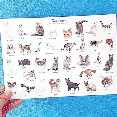スウェーデン ポストカード 猫 ボタニカルアート 紙もの ペーパークラフト 北欧雑貨